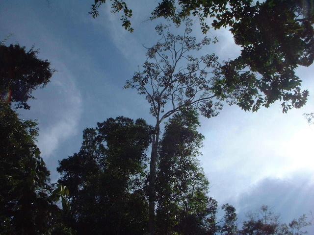 Sur la route des tépuys (Venezuela) Cielo_10