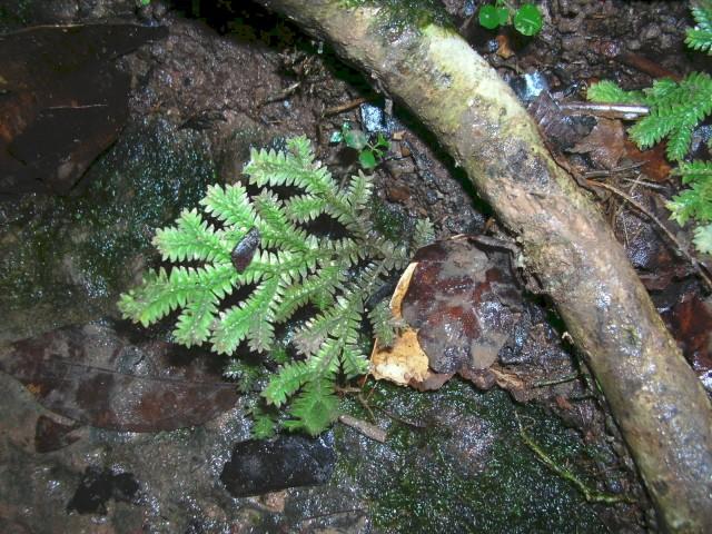 Dans la forêt humide du Venezuela photos de Kia Dscn3910