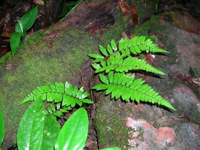 Dans la forêt humide du Venezuela photos de Kia Dscn3911