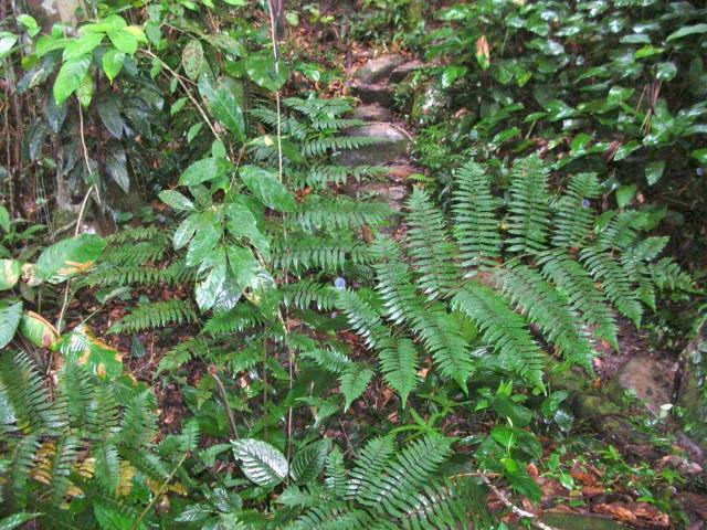Dans la forêt humide du Venezuela photos de Kia Dscn3912