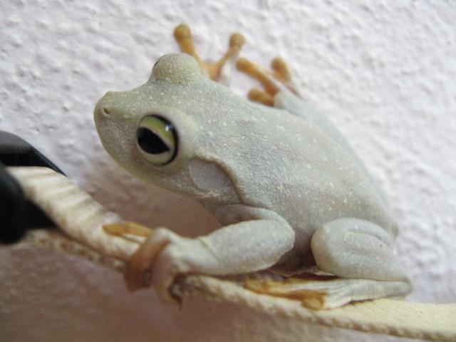 encore une grenouille de Lorette Img_7010