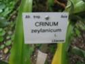 Liliaceae du Jardin Bota. Jardin26