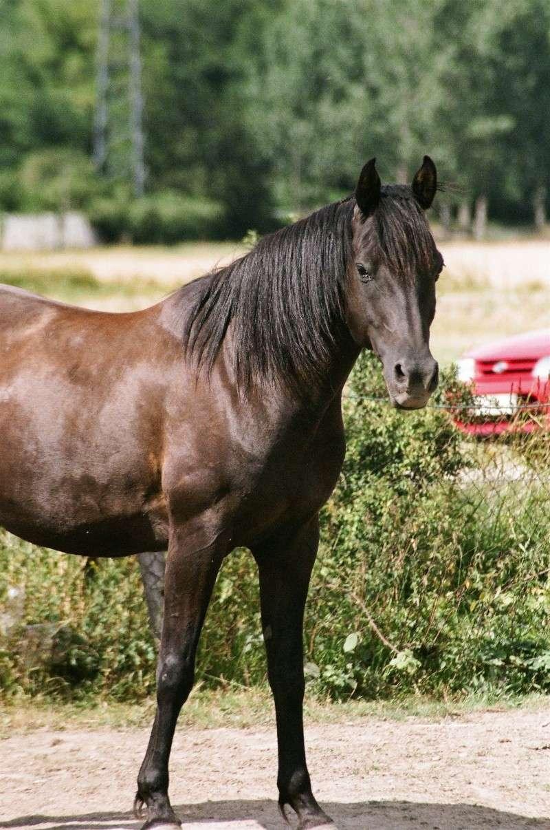 nos chevaux 76940012