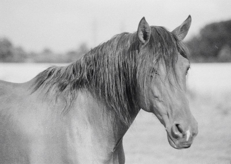 nos chevaux 77680022
