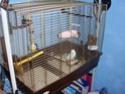 cage perruche Dsc00413