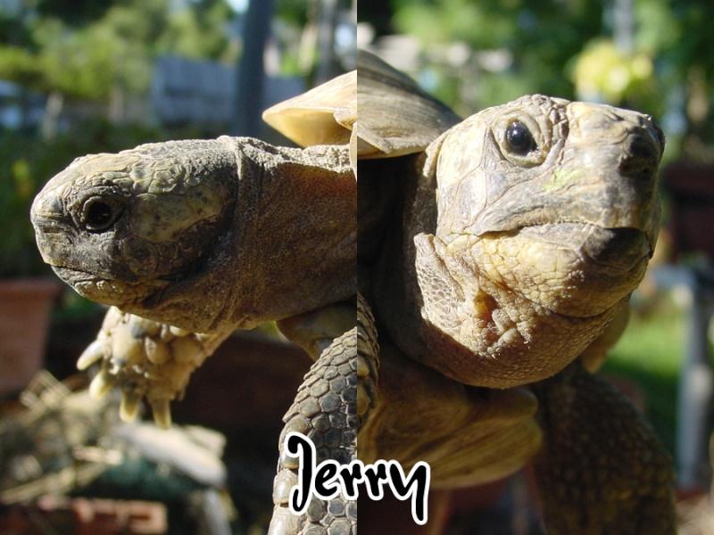Identifications de Tom & Jerry Tate-j10