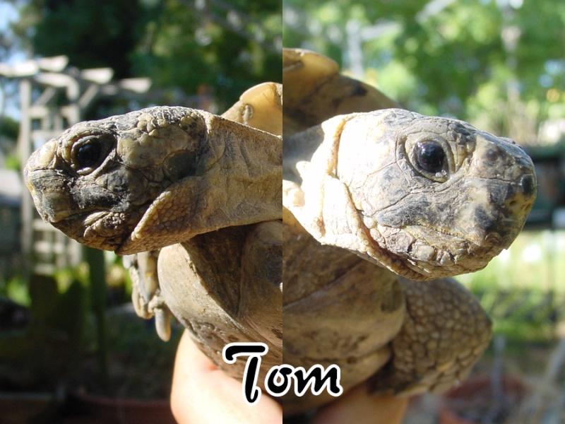 Identifications de Tom & Jerry Tate-t10