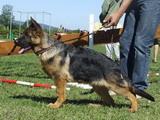 top-chiens Django11
