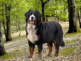 top-chiens Fabia111