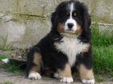 top-chiens Gwen210