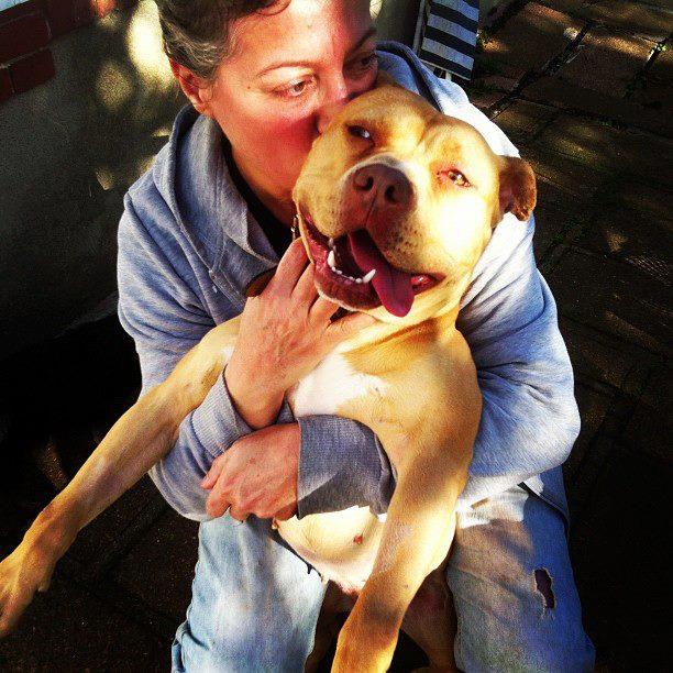 Rosie, adorable X dogue déclassée attend bon adoptant Rosie_10