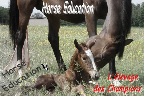 Horse Education