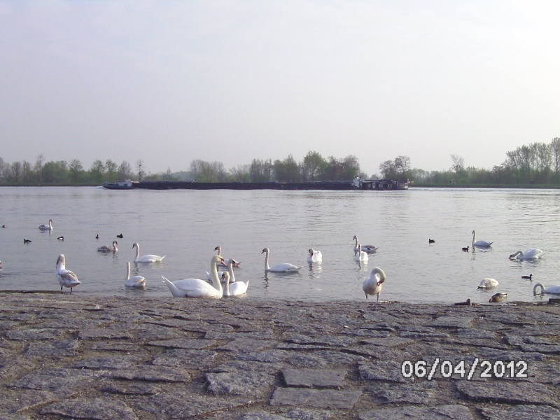 La nature autour de chez vous Bild3718