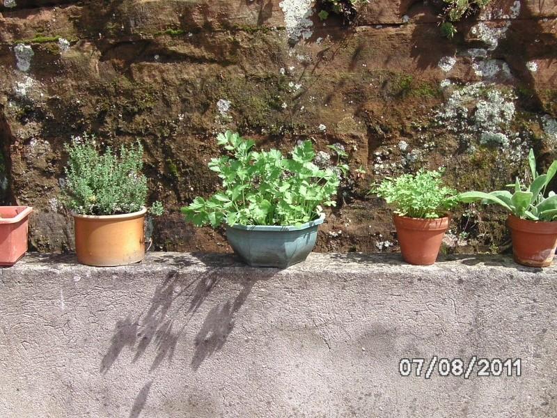 La nature autour de chez vous Jardin14