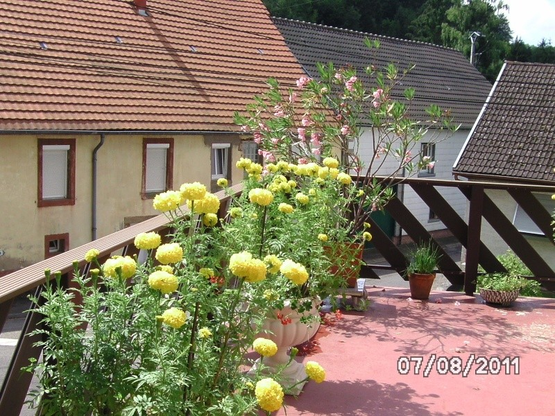 La nature autour de chez vous Jardin17