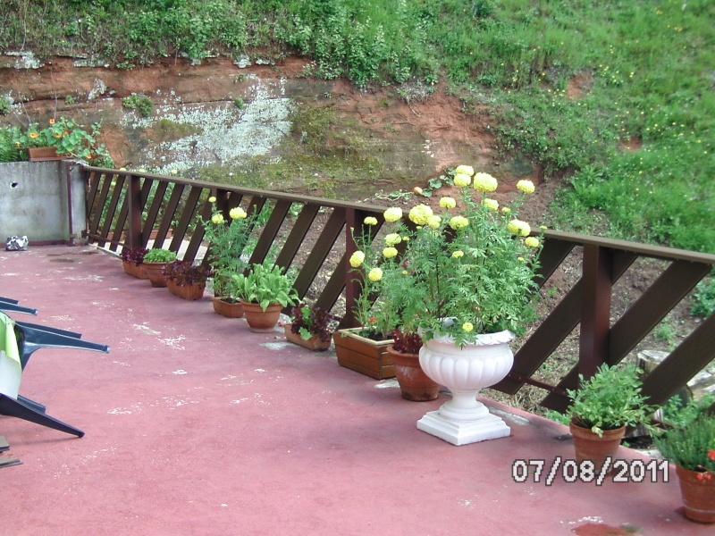 La nature autour de chez vous Jardin20