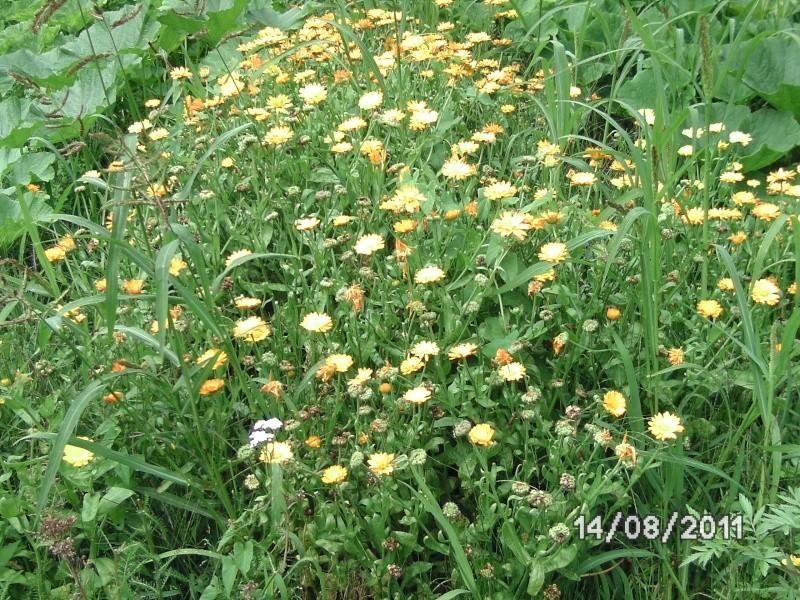 La nature autour de chez vous Jardin26