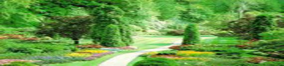Rêves médiumniques Chemin13