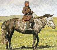 Cheval et divination mongol par la Scapulomancie Cheval13
