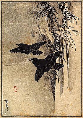 un cadeau chamanique : une plume de corbeau Corbea10