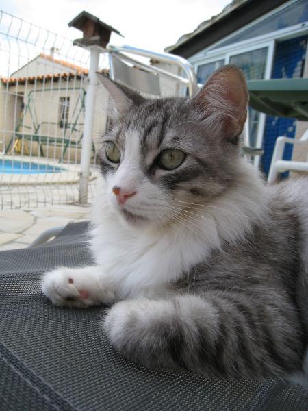 Témoignage de recherche du chat KYRIC Img_1410
