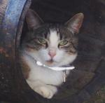 Recherche chatte Nouch'cat Nouch11