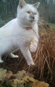 graminées et chatons B-pelo11