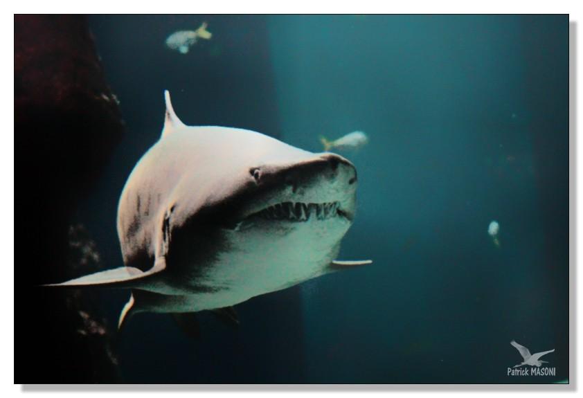 Un après midi à l'aquarium - Page 3 Pma25610