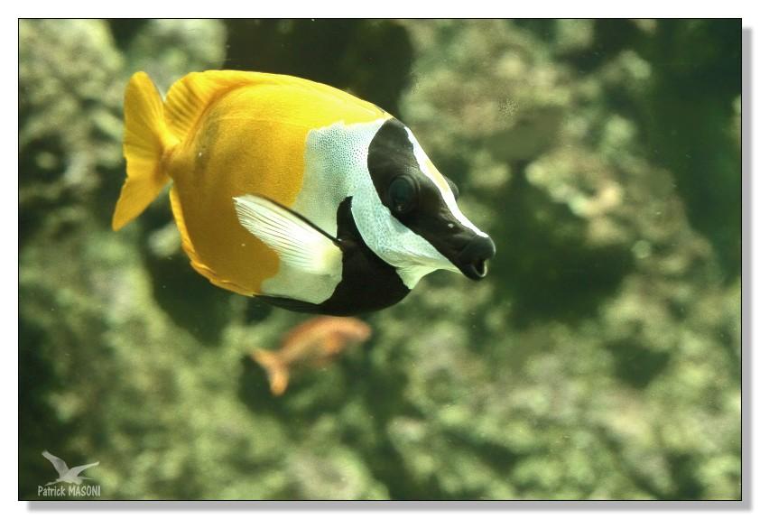 Un après midi à l'aquarium - Page 3 Pma25611