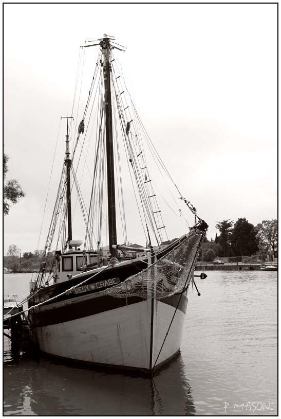 Le vieux crabe Pma65616