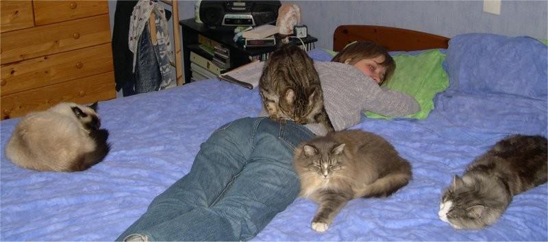 Allergies : ne laissez pas votre chat rentrer dans la chambre ! - Page 2 Seseet10