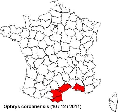 Ophrys corbariensis Corbar11