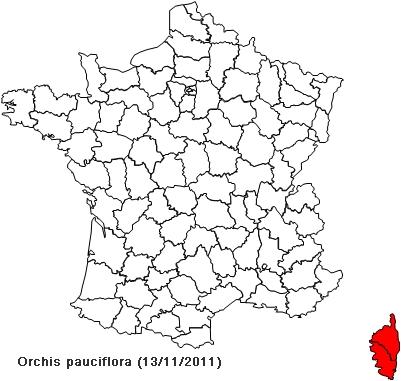 Orchis pauciflora ( Orchis à fleurs peu nombreuses ) Paucif10