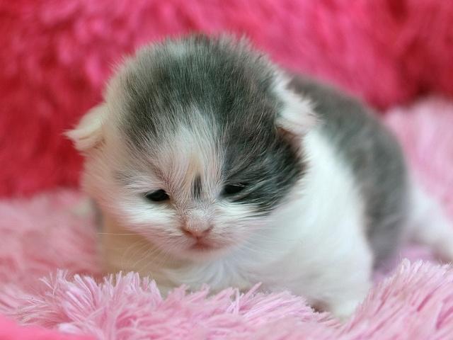 Je vous présente le bébé de Capucine :-) Dolce_13