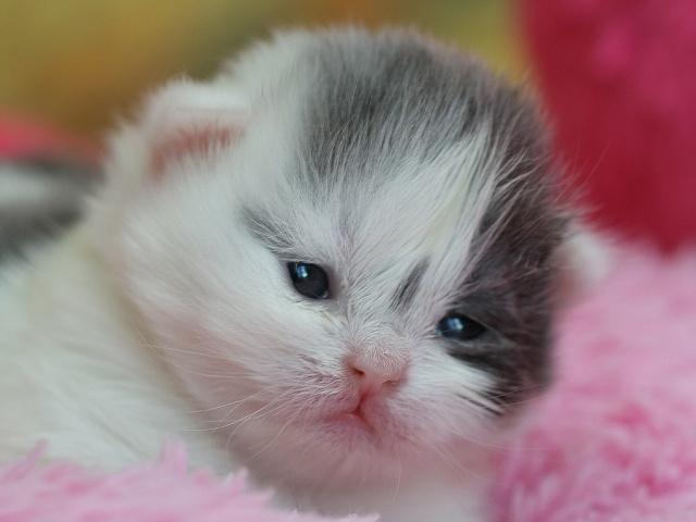 Je vous présente le bébé de Capucine :-) Dolce_15