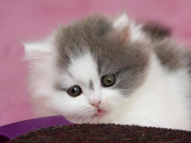 Je vous présente le bébé de Capucine :-) Dolce_27