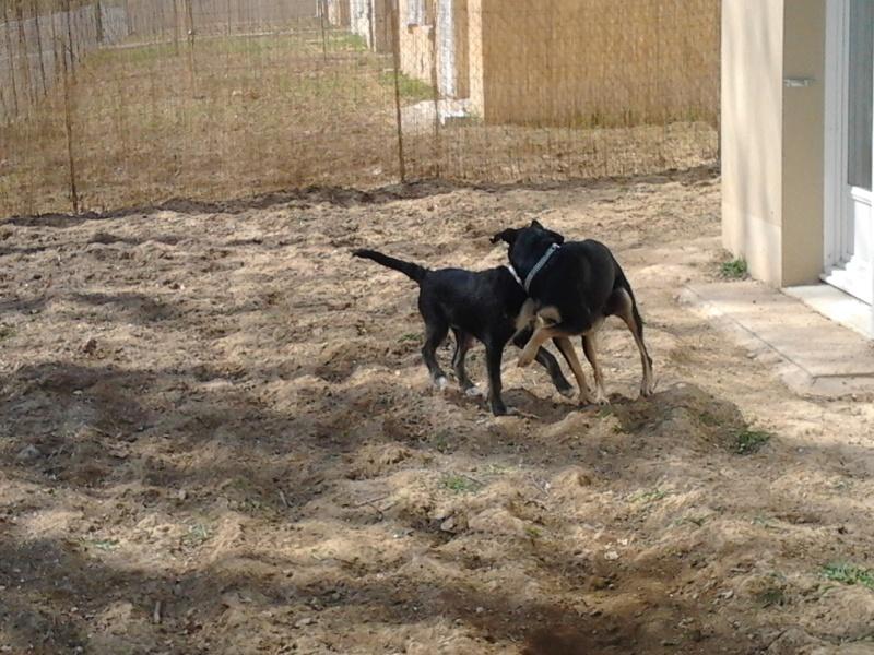 """Cool, jeune chien """"Royal Bourbon"""" né en septembre 2010 (10) - Page 3 Cool_012"""