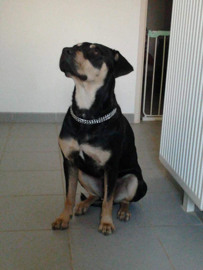 """Cool, jeune chien """"Royal Bourbon"""" né en septembre 2010 (10) - Page 3 Cool_013"""