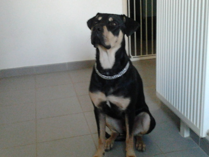 """Cool, jeune chien """"Royal Bourbon"""" né en septembre 2010 (10) - Page 3 Cool_014"""