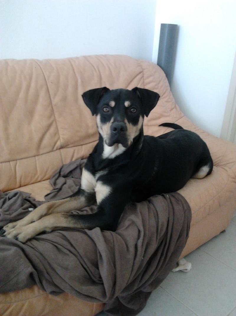 """Cool, jeune chien """"Royal Bourbon"""" né en septembre 2010 (10) - Page 4 Cool_017"""