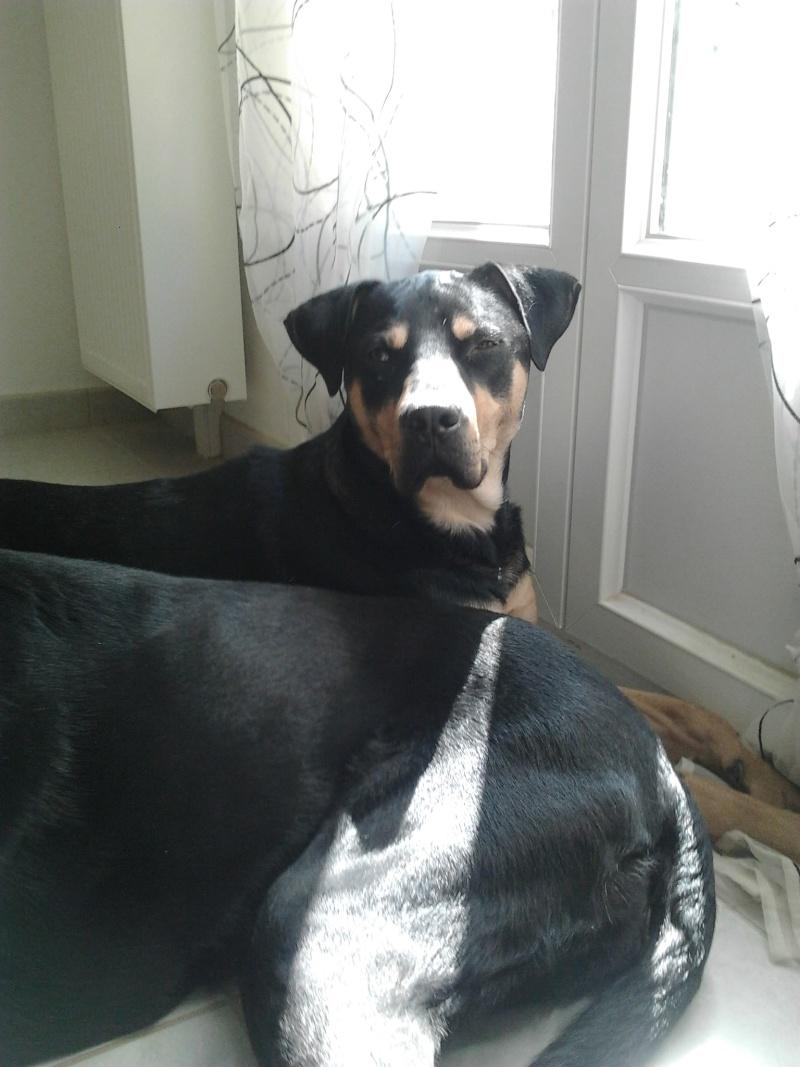 """Cool, jeune chien """"Royal Bourbon"""" né en septembre 2010 (10) - Page 4 Cool_018"""