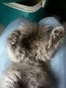 Photos de vos animaux - Page 2 Le_cha10