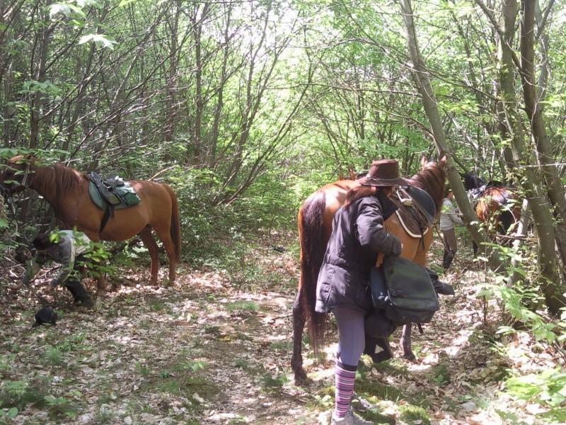 Balade en forêt de Bonnevaux dimanche 13 mai - Page 4 Pic00055