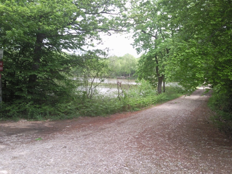 Balade en forêt de Bonnevaux dimanche 13 mai - Page 4 Pic00059