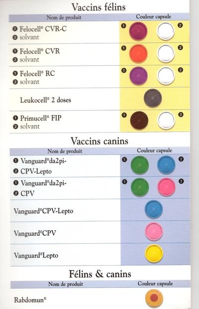 Schéma de la vaccination chez le chien et le chiot Dyn00310