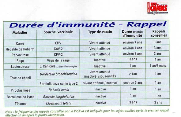 Schéma de la vaccination chez le chien et le chiot Vacc-s10