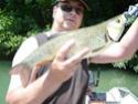 Pêche du chevesne aux leurres Sortie35