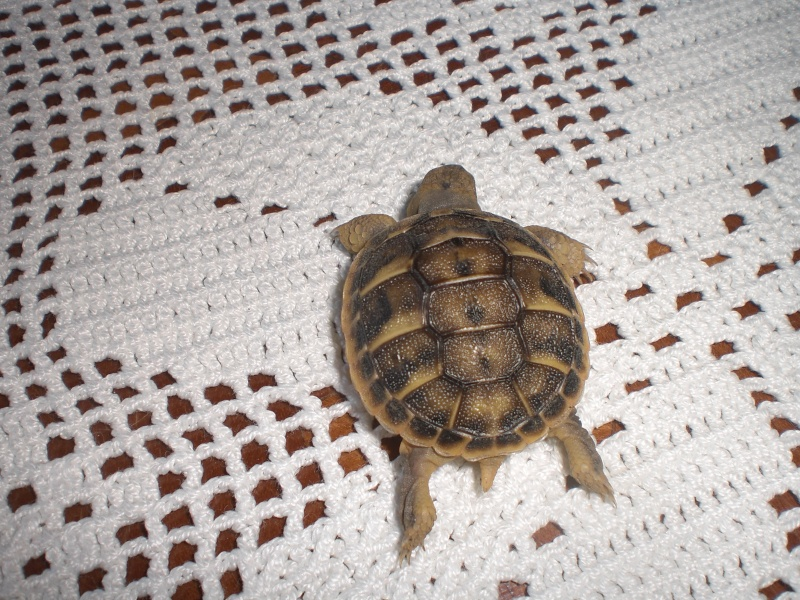 identification tortues de Caille - Page 3 02810