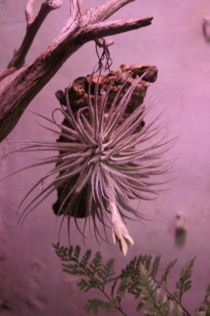 Petites folies d'Orchidays Bonsai17