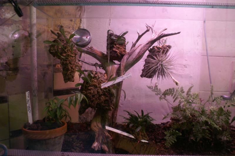 Petites folies d'Orchidays Bonsai18